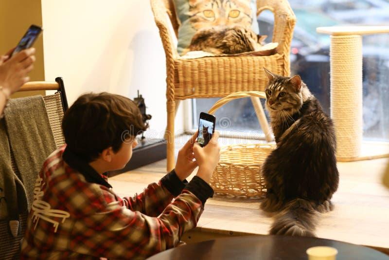 Le garçon d'adolescent en café de chat font la photo de la fin de chat de ragondin du Maine vers le haut de la photo images libres de droits