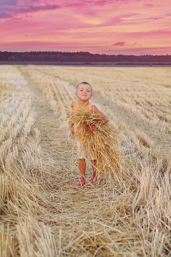 Le garçon de sourire rassemble une récolte des transitoires de blé Petit garçon heureux ayant l'amusement dans le domaine d'or photo libre de droits
