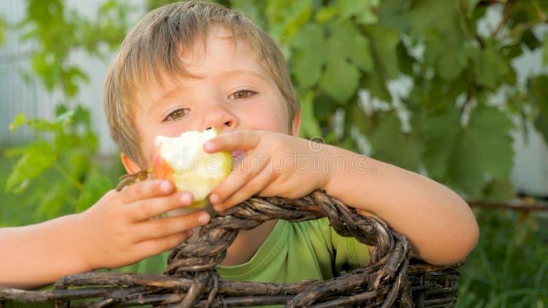 Le garçon mange la pomme Enfant dans le panier avec la pomme juteuse photo libre de droits