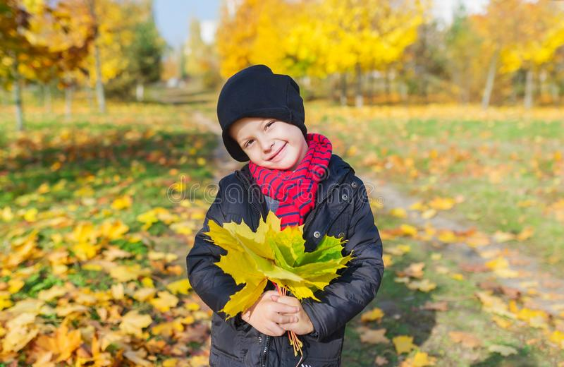 Le garçon mignon dans la veste tient un bouquet des feuilles de jaune d'automne dans la perspective d'un parc d'automne image stock