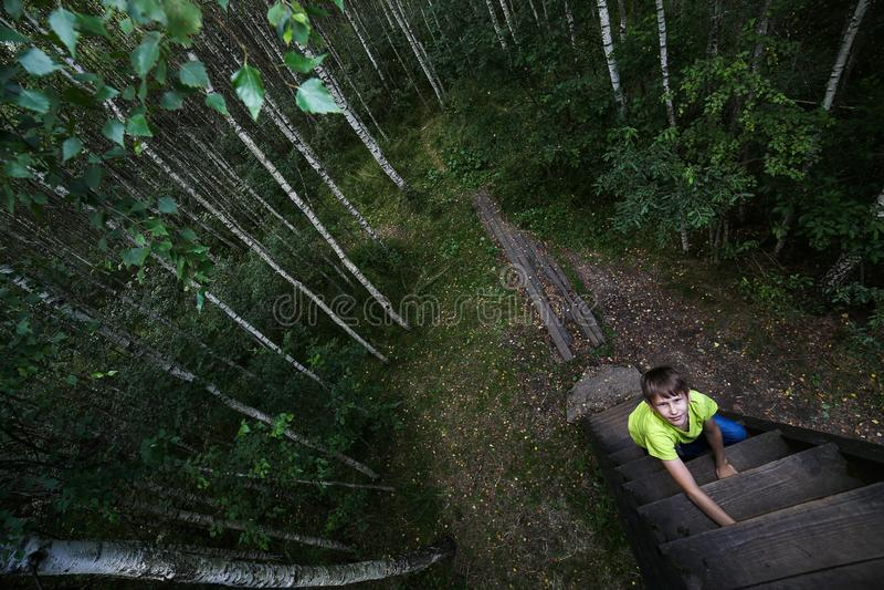 Le garçon monte les escaliers à l'arbre Forêt de bouleau, jour d'été Aventure intéressante photo stock