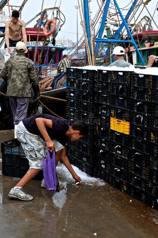 le garçon rassemblant les poissons de petite friture a été lâché par les marins photographie stock libre de droits