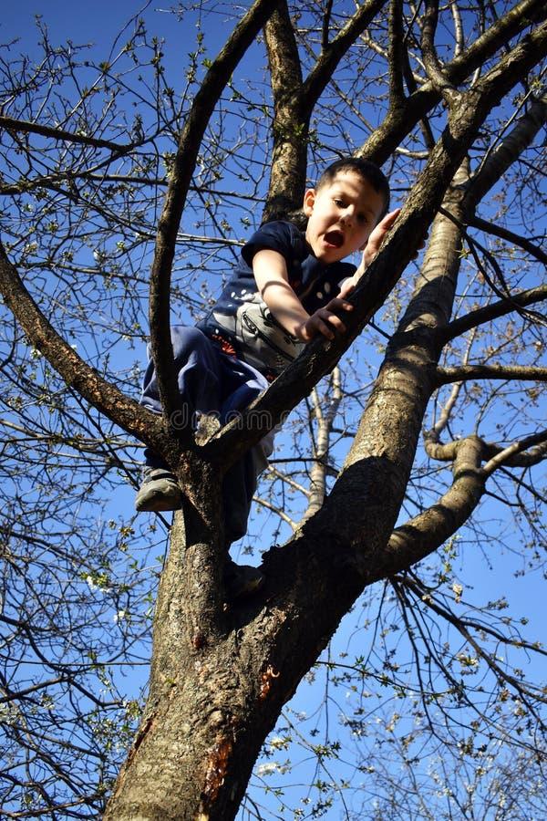 le garçon 4 an sur l'arbre a le problème à descendre de l'arbre photos stock