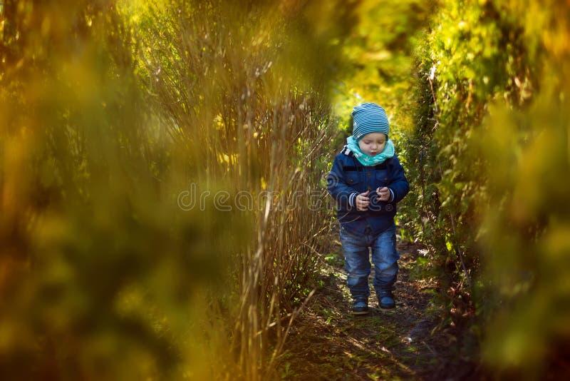 Le garçon va entre les buissons verts photos libres de droits