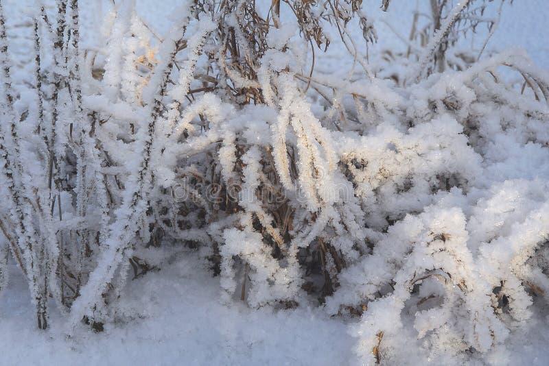 Le gel sur les branches images libres de droits