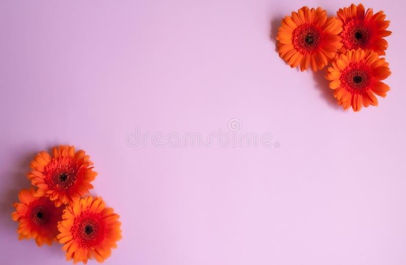 Le Gerbera fleurit le fond photos stock