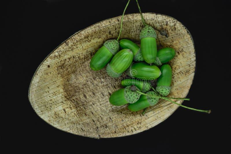 Le ghiande verdi e giovani della quercia in foglia naturale della banana placcano ed isolato su fondo nero immagini stock libere da diritti