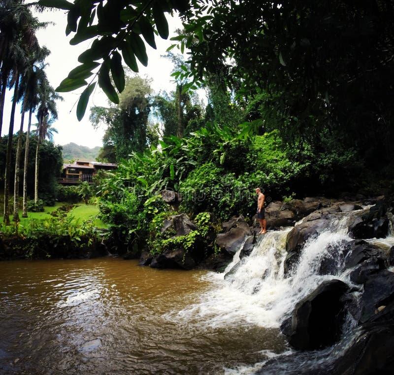 le gingembre d'âne met Hawaï en commun image libre de droits