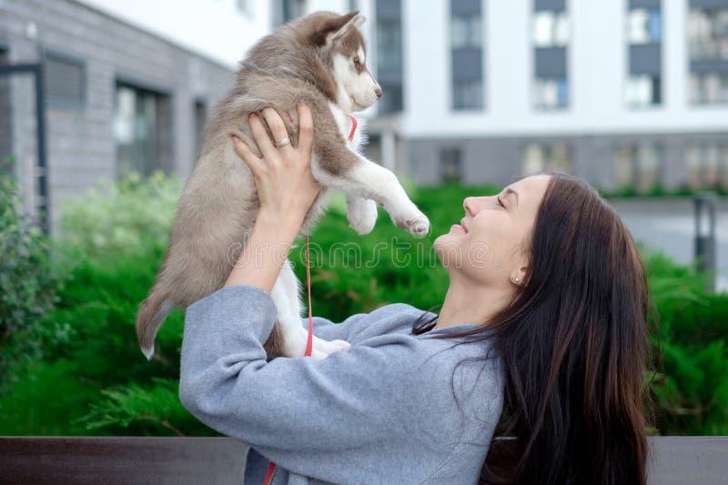 Le giovani donne tiene il suo piccolo cucciolo dell'animale domestico del migliore amico del husky in lei armi Amore per i cani immagine stock libera da diritti