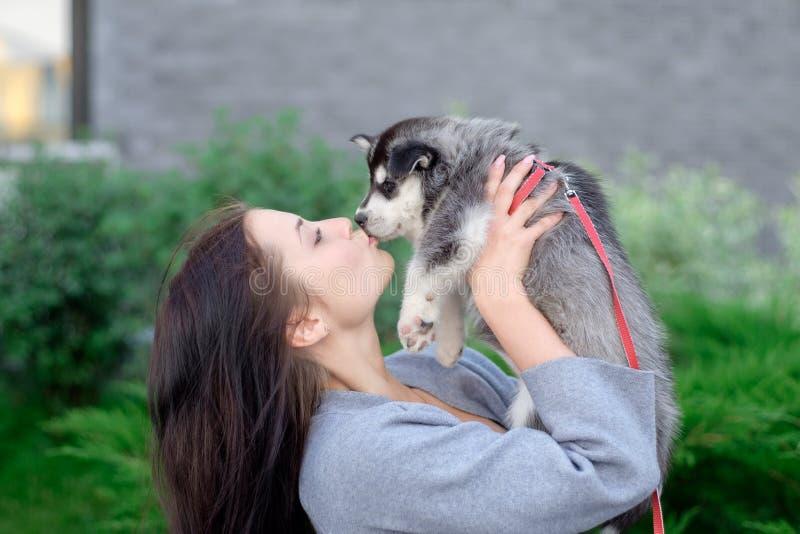 Le giovani donne tiene il suo piccolo cucciolo dell'animale domestico del migliore amico del husky in lei armi Amore per i cani immagini stock libere da diritti