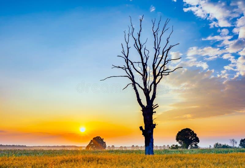 Le gisement de céréale avec le vieil arbre, paysage a photographié au matin photographie stock