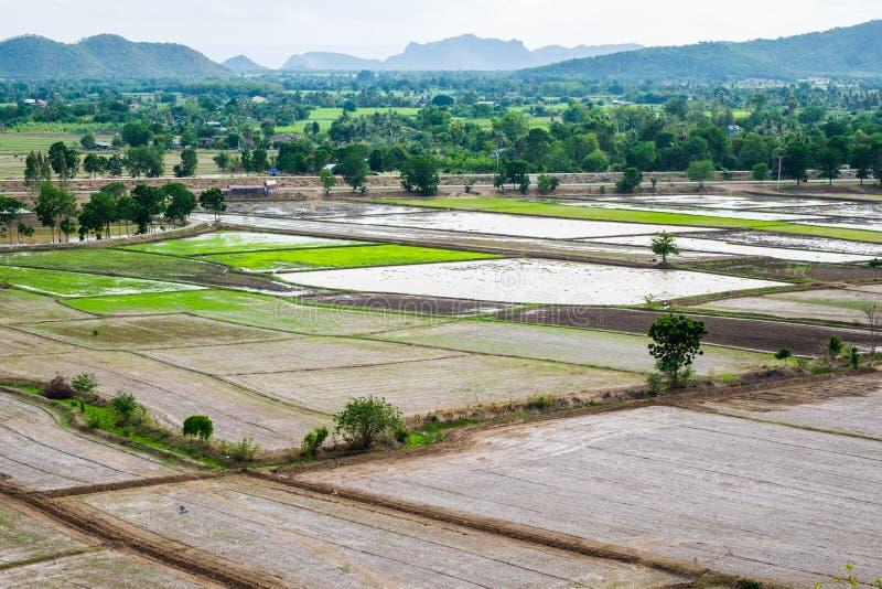 Le gisement de riz avec la montagne aride sèchent photographie stock libre de droits