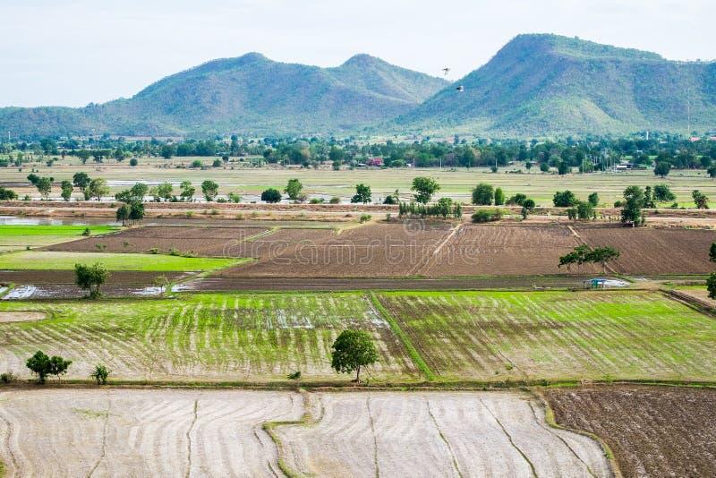 Le gisement de riz avec la montagne aride sèchent image libre de droits
