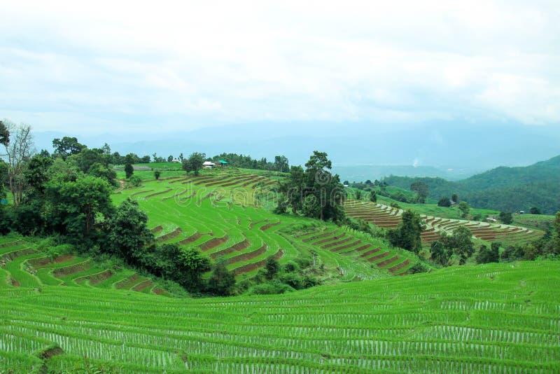 Download Le Gisement En Terrasse Vert De Riz à La PA Bong Le Village De Piang, Chiangmai, Thaïlande Image stock - Image du fermier, bleu: 76076049