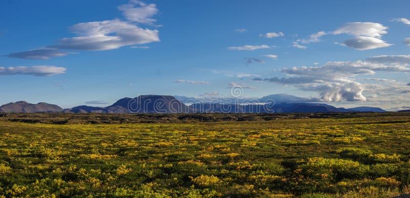 Le gisement et le volcan de lave couverts par mousse montent près du paysage d'été de Myvatn de lac photographie stock