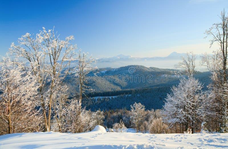 Le givre a couvert des arbres en montagne de l'hiver photographie stock