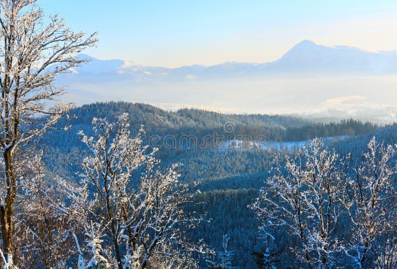 Le givre a couvert des arbres en montagne de l'hiver photos libres de droits