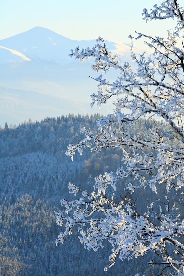 Le givre a couvert des arbres en montagne de l'hiver images libres de droits