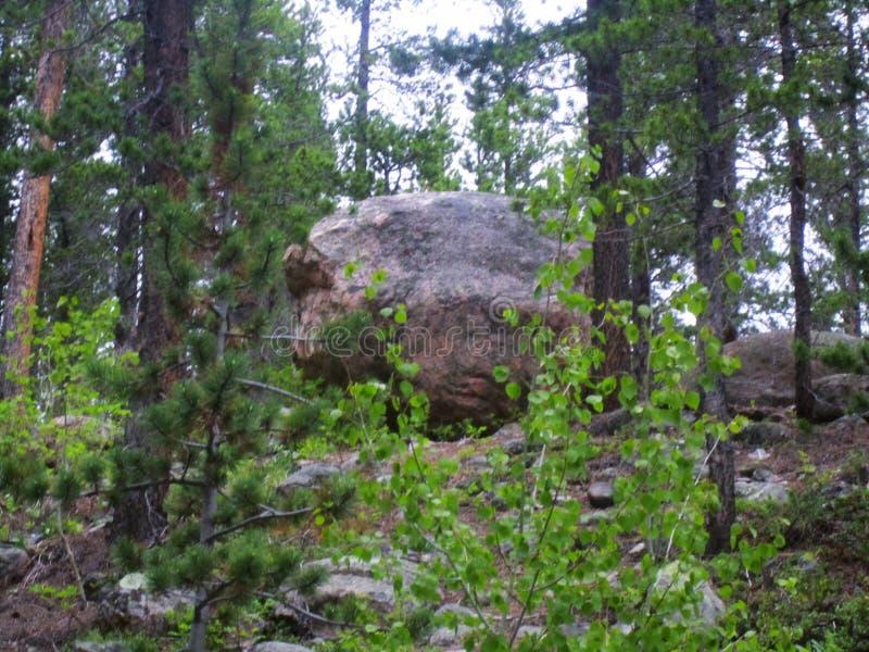 Le glacier de Forest Near St Mary national d'Arapaho scénique, le Colorado images stock