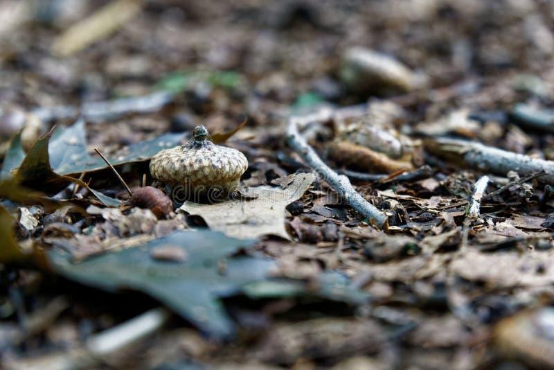 Le gland dans le feuillage d'automne, chute part du fond photos stock