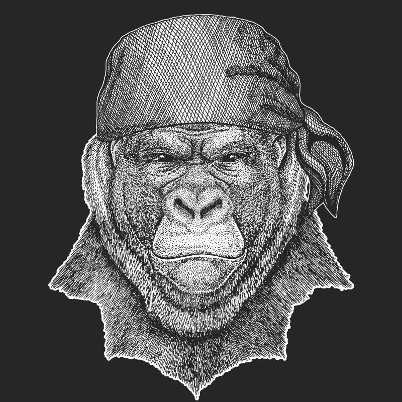 Le gorille, singe, imitent le pirate frais, marin, seawolf, le marin, animal de cycliste pour le tatouage, T-shirt, emblème, insi illustration stock