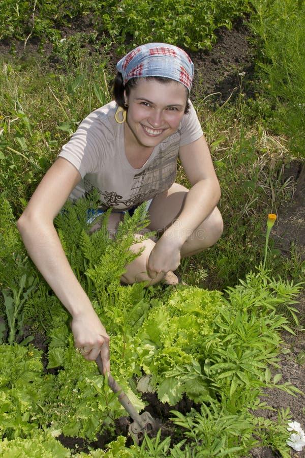 le grönsak för trädgårds- trädgårdsmästare royaltyfri bild