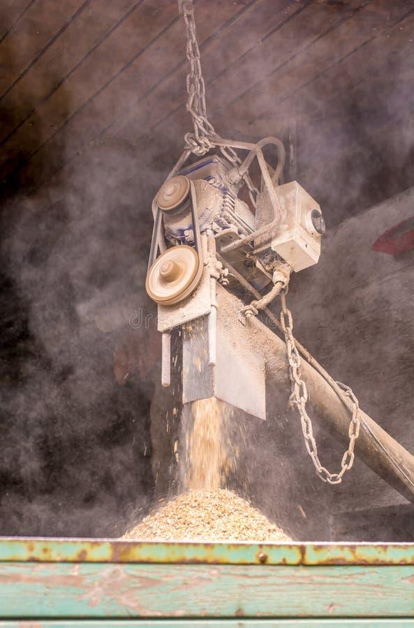 Le grain est chargé sur une remorque par l'intermédiaire d'une machine photo stock