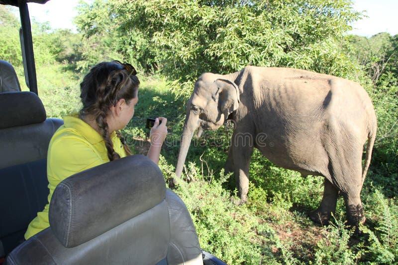 Le grand éléphant gris et la fille dans la chemise jaune photos stock