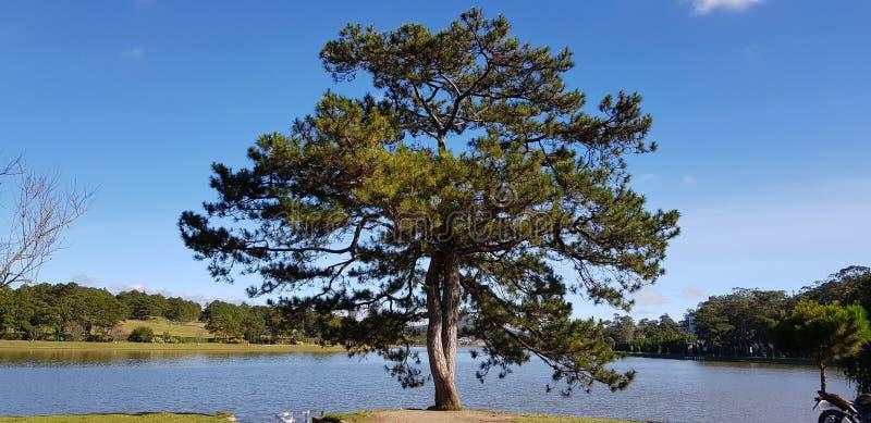 Le grand arbre dans le bord de lac photo stock