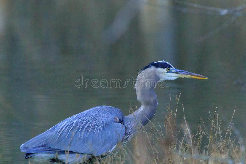 Le grand chasseur photographie stock