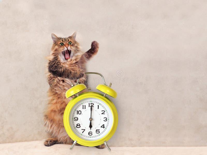 Le Grand Chat Hirsute Est Position Très Drôle Horloge 8 Photo stock - Image du chaton, alarme ...