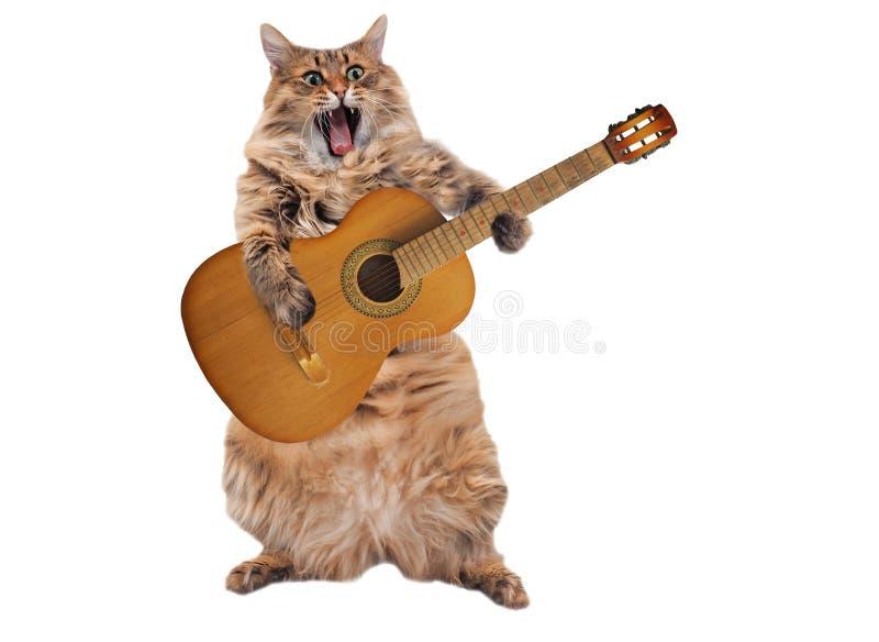 Le grand chat hirsute est position très drôle Numéro 2 images stock