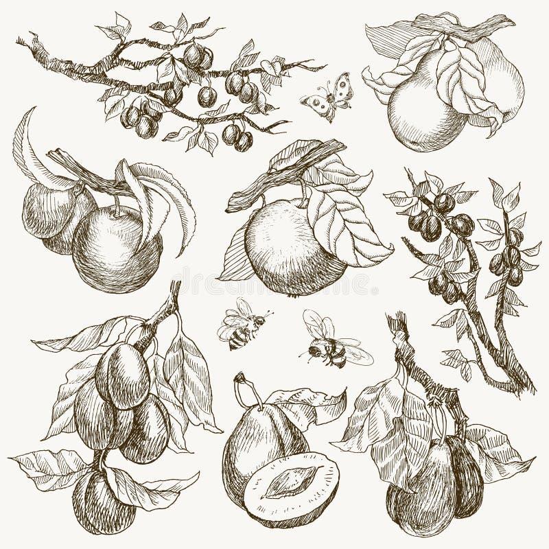 Le grand ensemble de jardin porte des fruits style de gravure D'isolement sur le fond Illustration tirée par la main de rétro sty illustration stock