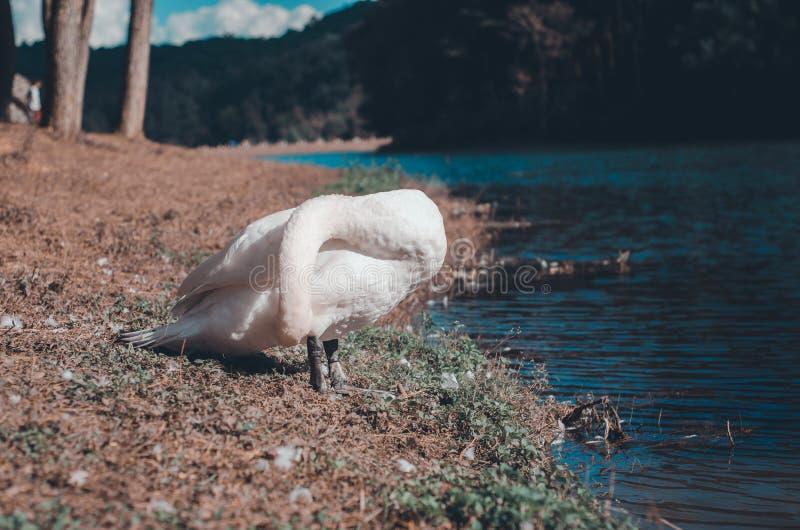 Le grand oiseau a les cheveux blancs image libre de droits