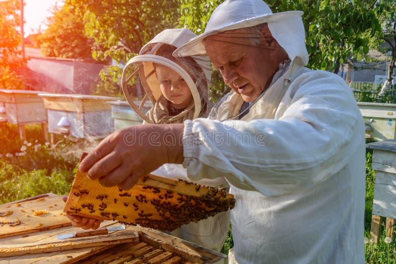 Le grand-père expérimenté d'apiculteur enseigne son petit-fils s'inquiétant des abeilles Apiculture Le transfert de l'expérience photo libre de droits
