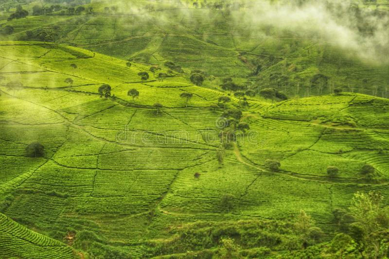 Le grand Pangalengan, Java occidental, Indonésie photographie stock