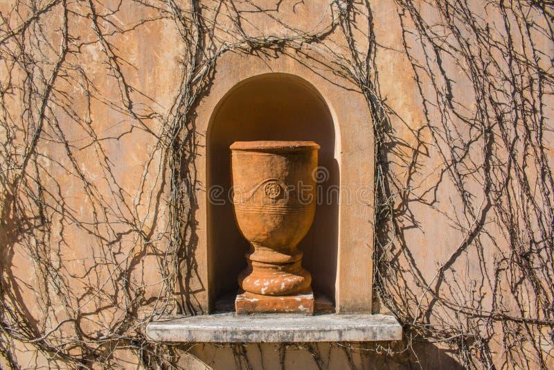 Le grand pot aiment la statue avec les vignes mortes images libres de droits