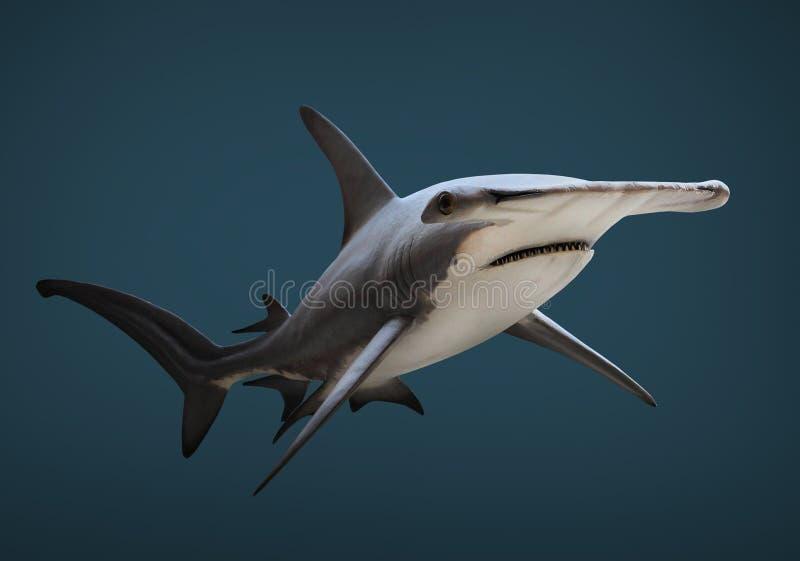 Le grand requin de poisson-marteau photo libre de droits