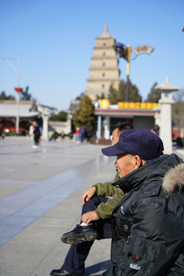 Le grand ` sauvage de la pagoda XI d'oie images libres de droits