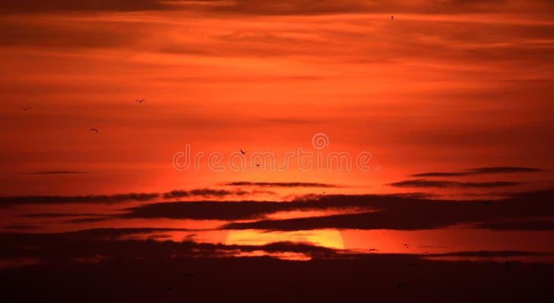 Le grand soleil au coucher du soleil avec la silhouette de nuages et d'oiseaux photo libre de droits