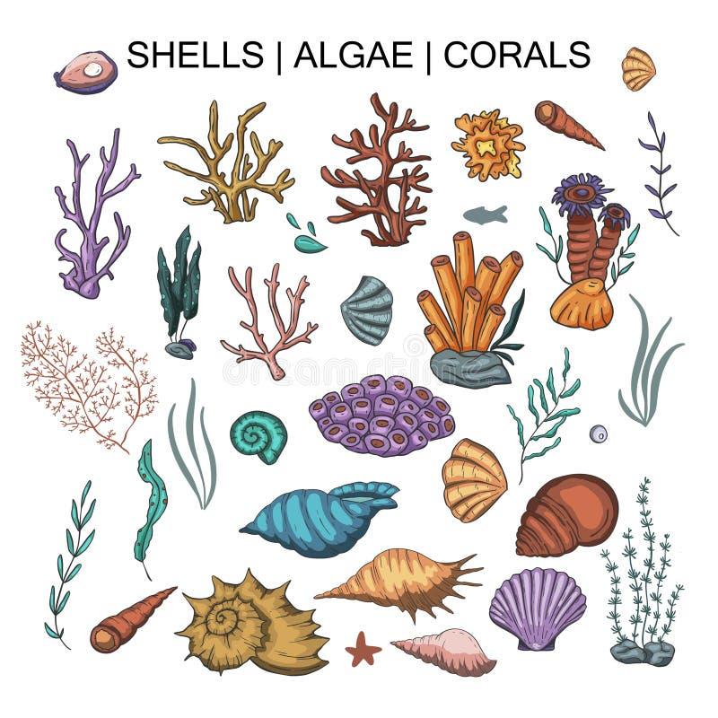 Le grand vecteur d'algues, de corail et de coquilles a placé illustration libre de droits