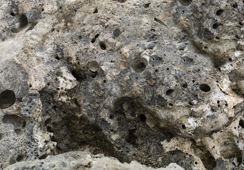 Le gris en pierre superficiel par les agents inégal avec des cratères troue la géologie taillée de fond de mer de l'eau photo libre de droits