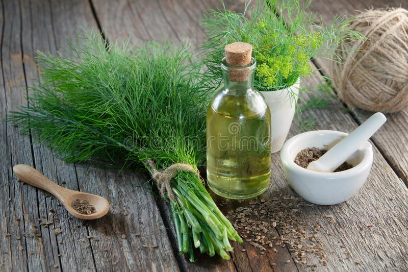 Le groupe d'aneth vert frais, le mortier des graines de fenouil et l'aneth huile image libre de droits