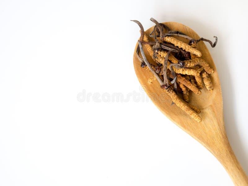 Le groupe de cordyceps de sinensis ou de champignon d'Ophiocordyceps ceci est des herbes placées sur la cuillère en bois sur le f photos stock