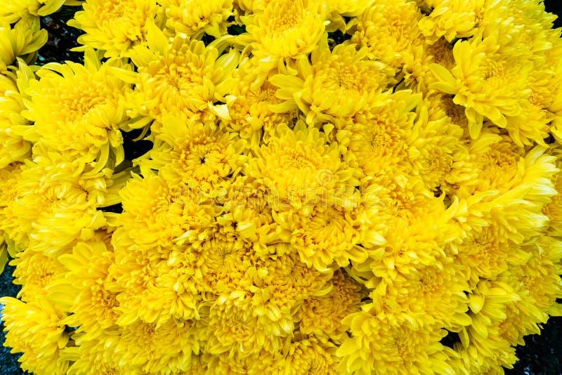 Le groupe de fleurs jaunes fraîches d'aster ou de chrysantemum a trouvé à un marché de fleur de la ville photo libre de droits