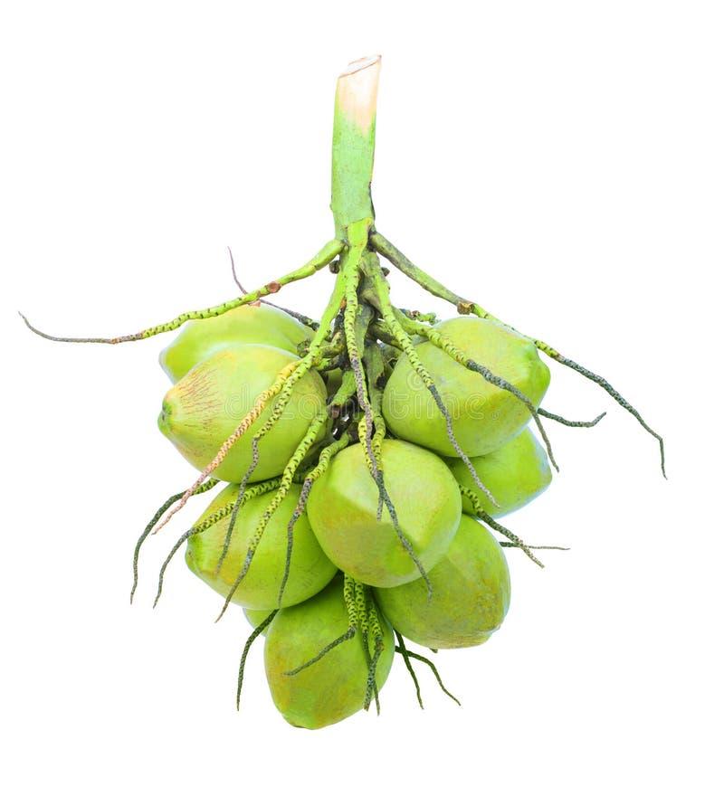 Le groupe de l'usine verte de noix de coco a isolé le fond blanc photo stock