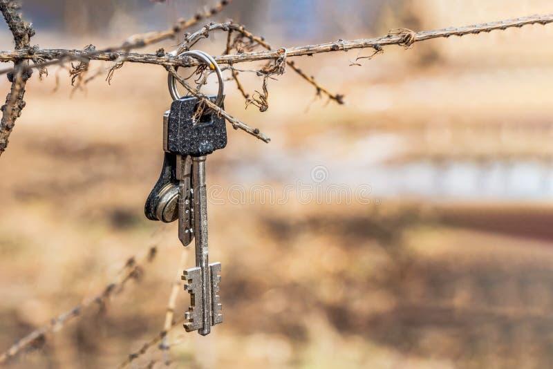 Le groupe de métal brillant a perdu des clés de maison sur l'anneau accrochant sur une branche d'arbre photos stock