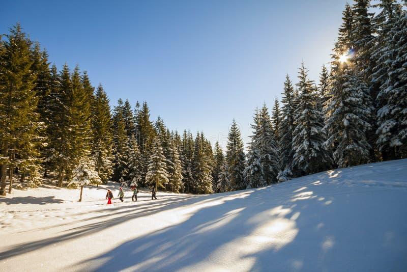 Le groupe de touristes marchant dans la forêt d'hiver avec la neige a couvert la goupille photographie stock