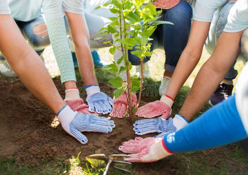 Le groupe de volontaires remet planter l'arbre en parc photo stock