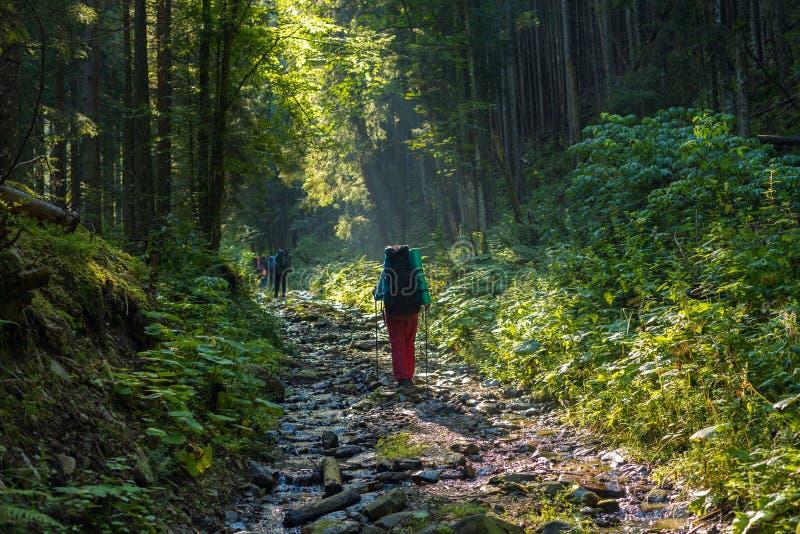 Le groupe de voyageurs, avec des sacs à dos, monte une route de montagne photographie stock libre de droits